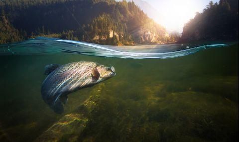 Потресаващо: Риби се варят живи в сгорещена от слънцето река (ВИДЕО) - 1