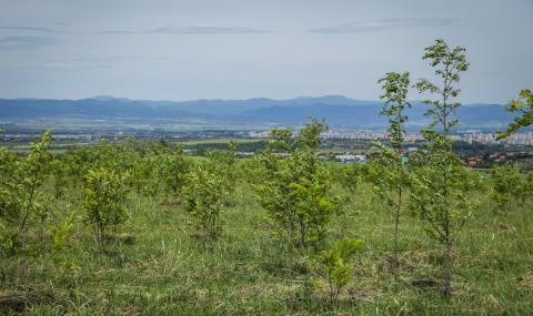 Засаждането на новата гора на София продължава през есента