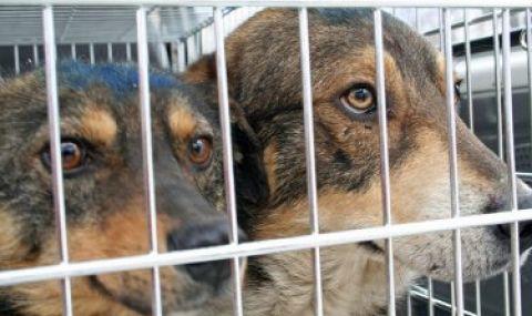 Чужденци осиновяват най-често софийските бездомни кучета