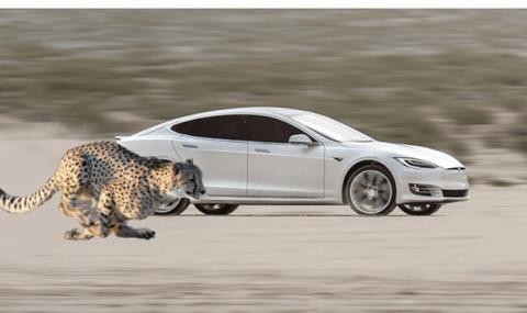 """Какво е """"позиция гепард"""" при електромобилите Tesla?"""