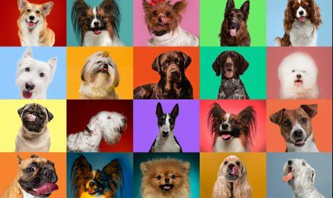 Топ 10 на най-популярните породи кучета