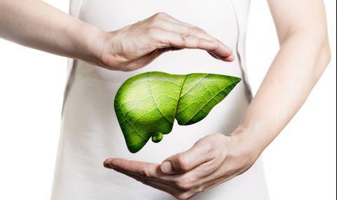 Билки и лекове за здрав черен дроб