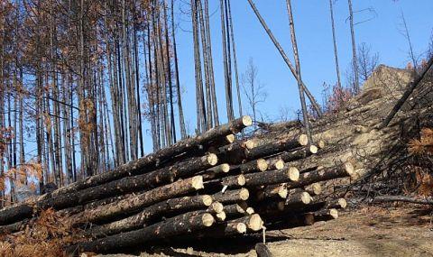 Варненци отново се вдигнаха заради гората край града