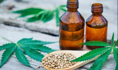 5 полезни свойства на конопеното семе