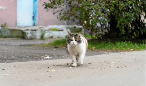 Котка измина 1200 километра