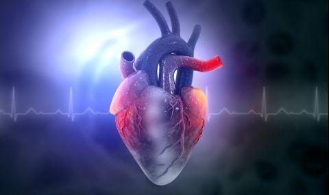 Показаха връзка между храненето и сърдечно-съдовите заболявания
