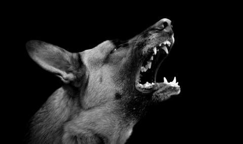 Глутница кучета нападна майка с дете в Дупница