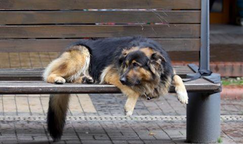 Куче нахапа дете в центъра на голям град
