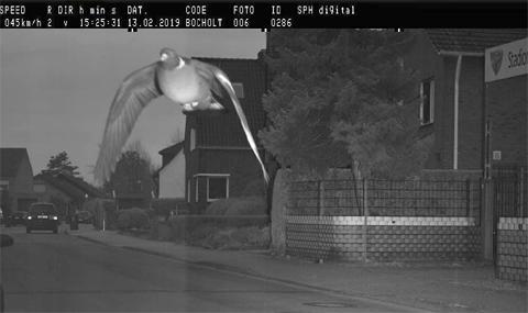Камера засече гълъб с превишена скорост