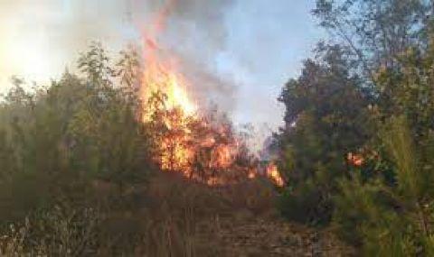 Няма опасност за хората в Кирково, пожарът е локализиран - 1