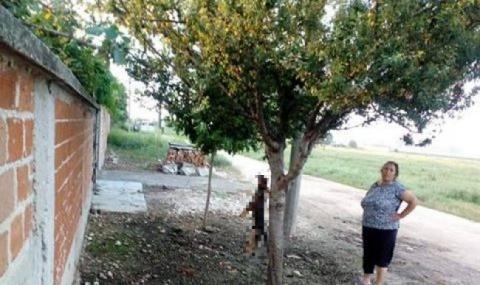 Жена обеси куче на дърво в Раковски