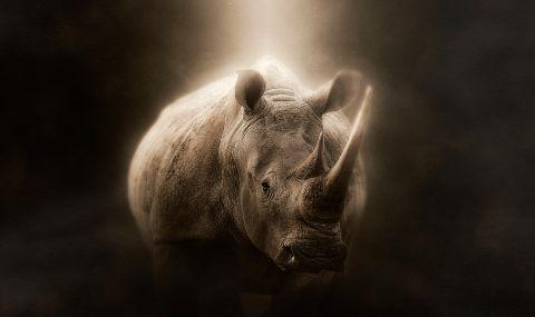 Атомни технологии спират бракониерството на носорози