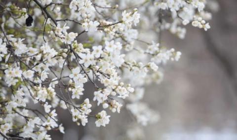 Слънчева, приятна и топла Цветница