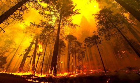 Пожарът край гръцкия град Патра продължава да бушува - 1