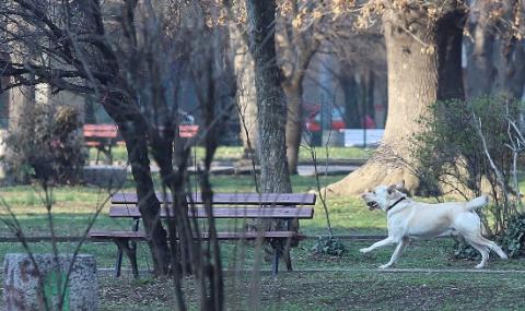 Зверско нападение на куче в Пловдив