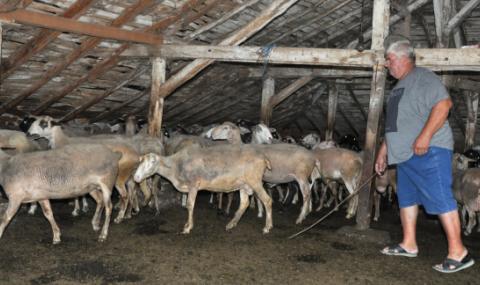 Стопани на хиляди овце и кози се съвещават с ветеринари в Харманлийско