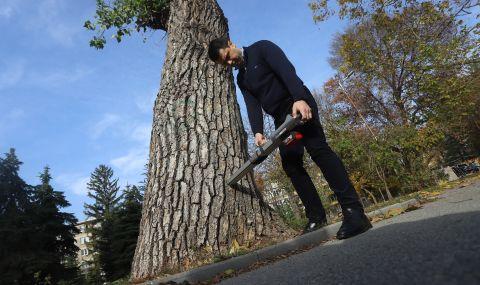 Опасни дървета в софийските паркове