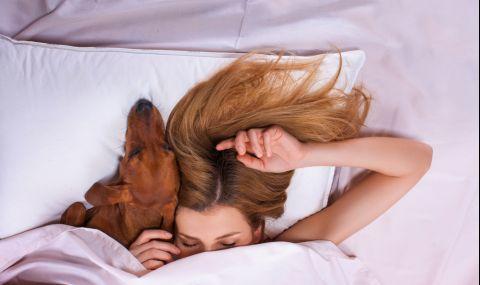 Кучето решава проблемите ви със съня - 1