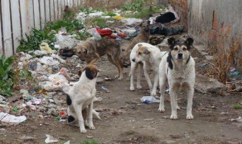 Кмет предложи до 500 лева глоба за хранещите бездомни кучета