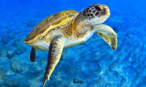 15 души се отровиха с месо на костенуркa в Мадагаскар