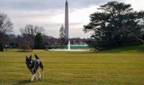 Зло куче в Белия дом! Пращат провинилия се домашен любимец на Джо Байдън на дресировка