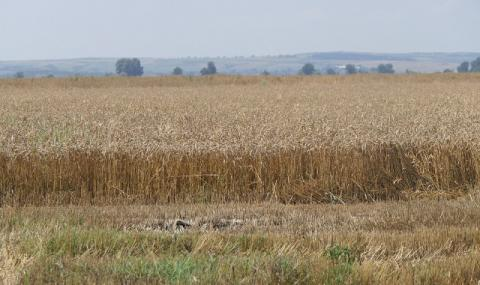 МЗХГ: Земеделската кампания няма да се провали