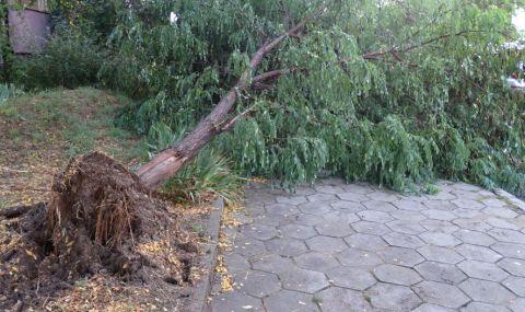 Силна буря остави Драгоман без електричество