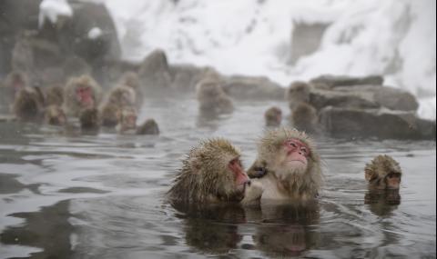 Как японците се топлят през зимата