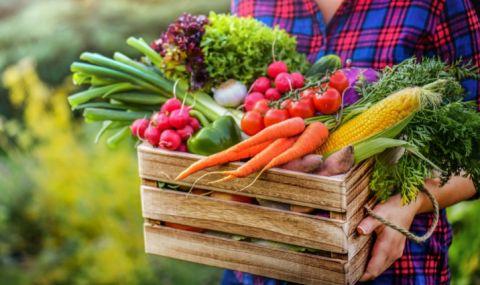 Значителен спад в производството на зеленчуци