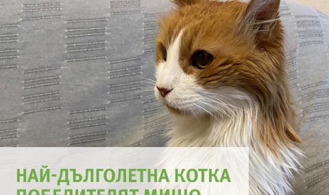 Ето я най-дълголетната котка в България