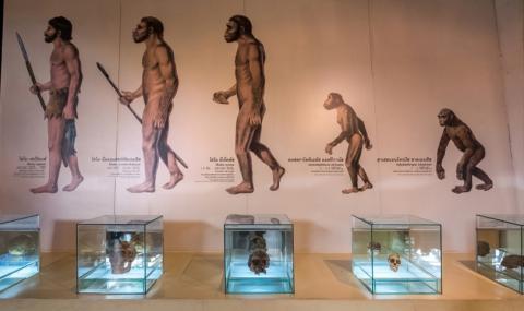 Опровергаха популярна теория за произхода на човека