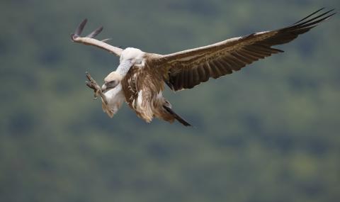 Разследват смъртта на застрашени птици