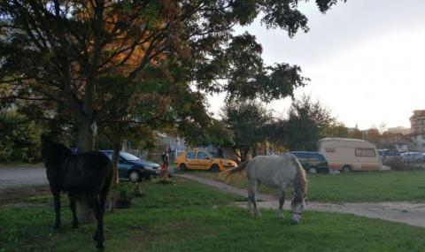 Стадо коне мачка коли в