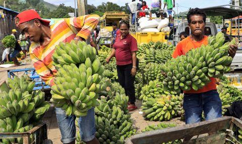 Бананите са застрашени от изчезване