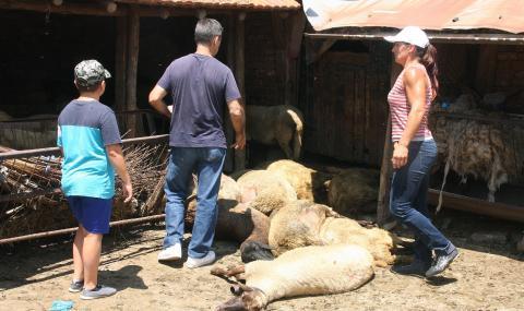 БСП: Лъжат, че ще компенсират животновъдите!