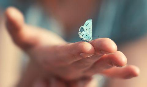 Учени по иновативен начин следят миграцията на няколко вида насекоми