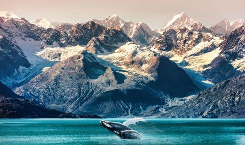 Земетресение със сила 8,2 разтърси Аляска - 1