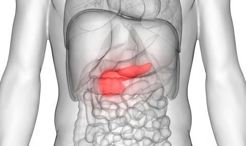 3 природни лека за здрав панкреас, за които лекарите не говорят