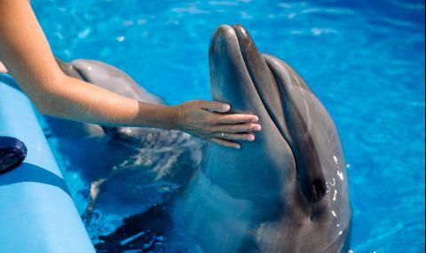Делфин се самоуби заради съкрушителна раздяла - 1