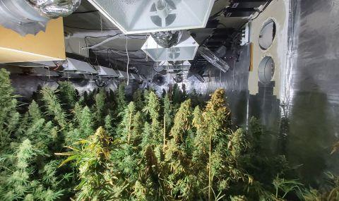 Къща с оранжерия за марихуана изгоря в София, задържаха собственика   - 1