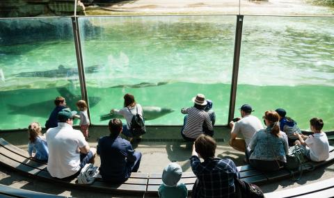 Берлинските зоопаркове отново отвориха