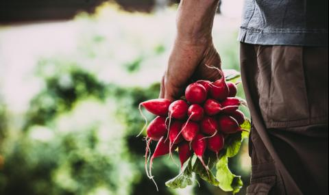 Защо е важно да ядем репички? (ВИДЕО)