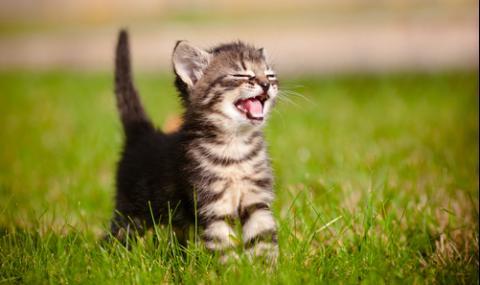 Жестокост! Обезглавиха и одраха котенце в Тракия (СНИМКИ 18+)