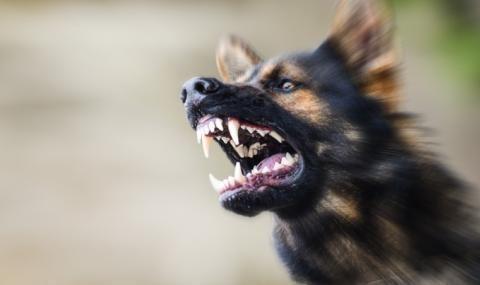 Глутница кучета тероризира Дупница, нападна и дете