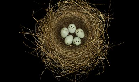 Птички си свиха гнездо в крилото на самолет (ВИДЕО)