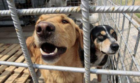 Протест в София: Приютите за животни са ужасни