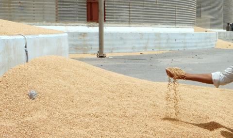 Реколтата от пшеница стига 6 млн. тона