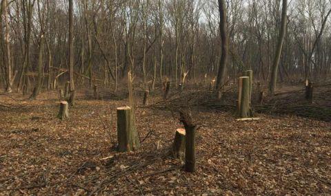Горски служители гониха бракониери из гора във Врачанско