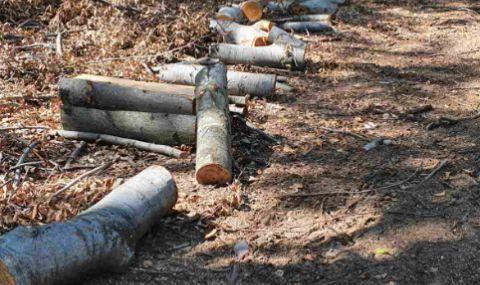 1/3 от дърводобива у нас е незаконен