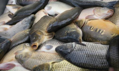 Заловиха бракониери в Монтанско, иззети са над 80 килограма шаран